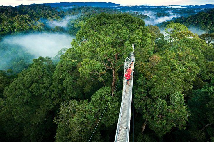La Réserve de Monteverde au Costa Ricasubjugue par sa beauté et sa grande biodiversité.Sculptées par le vent,les forêts tropicales&nb