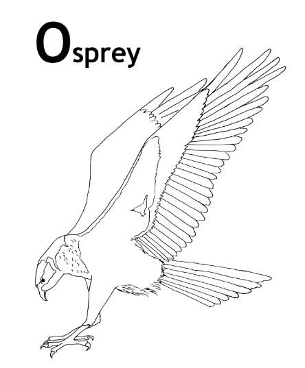 Cycle 1 SCIENCE coloring pages (5th edition) | Nature ...