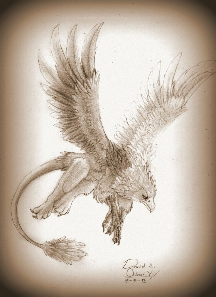 Hippogriff - Hipogrifo by natthan54