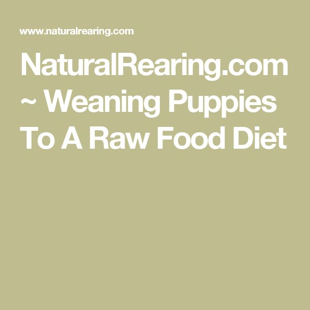 NaturalRearing.com ~ Weaning Puppies To A Raw Food Diet