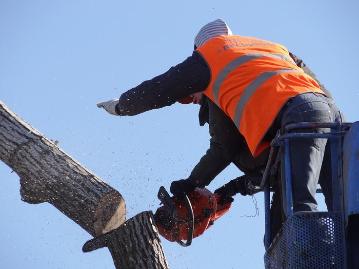 Removing a tree needs special training and equipment, and Tall Timbers Tree Services has the tools and knowledge to perform the job quickly and effectively .