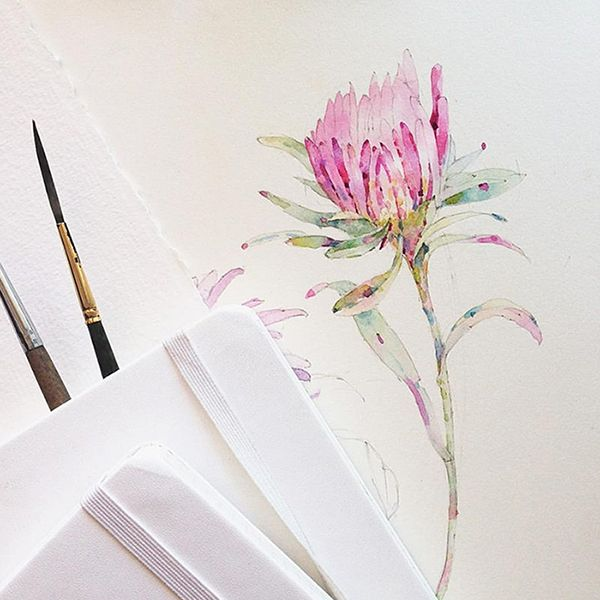 Flowers sketchbook by Katerina Pytina on Behance. Watercolor protea