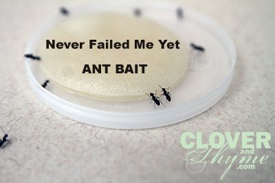 "Homemade Ant Bait: 1/2 cup sugar, 1 cup very warm water, 2 TBS Borax ""I have had fantastic results with this mixture, in these proportions, on a variety of ants. **Make sure to keep these baits far away from pets and curious toddlers as it can be harmful and toxic to both.** When not in use, I keep the bait mixture in my fridge in a glass container on the bottom shelf, marked ""ANT BAIT"" in bold letters."""