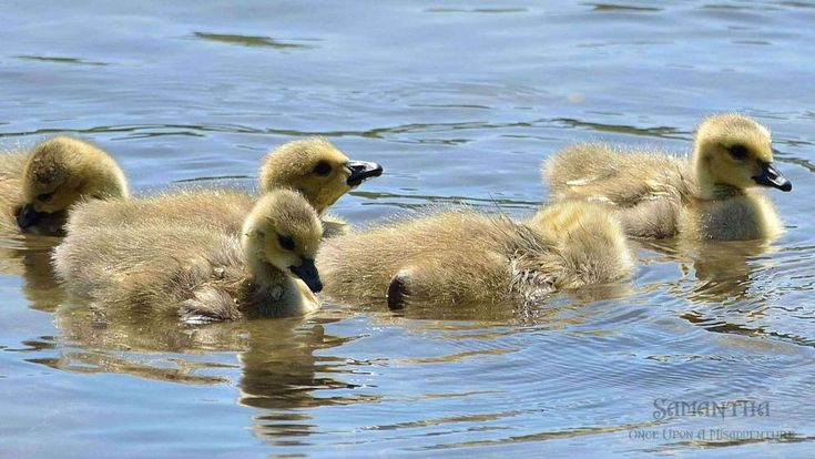 Swimming Lessons by Samantha Cullen