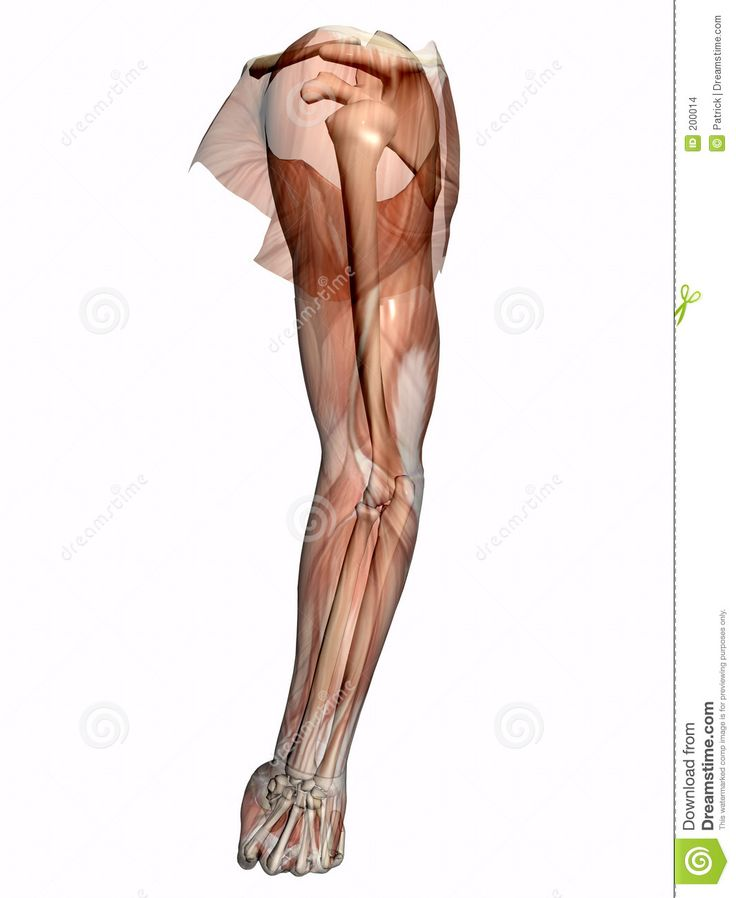 79 best ANATOMIA images on Pinterest | Human anatomy, How to draw ...