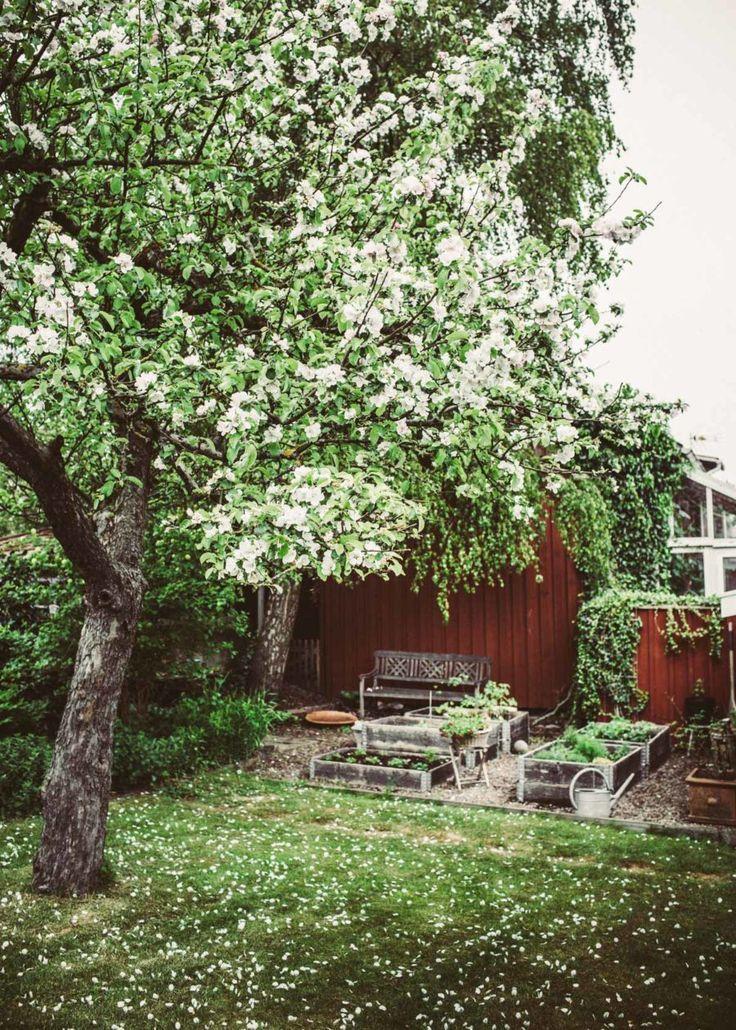 Äppelblom i fredagsbuketten | Krickelin