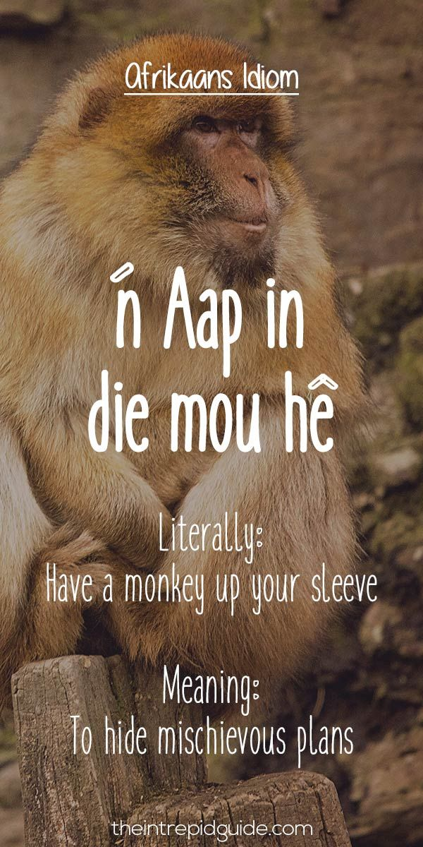 25 Hilarious Afrikaans Idioms That Should Exist in English