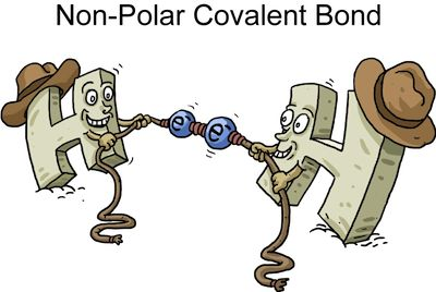 Non-Polar Covalent Bond: a bond where the electrons are shared equally-Jillian Charland