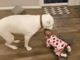 I'll cover you master! http://ift.tt/2wpP7MW