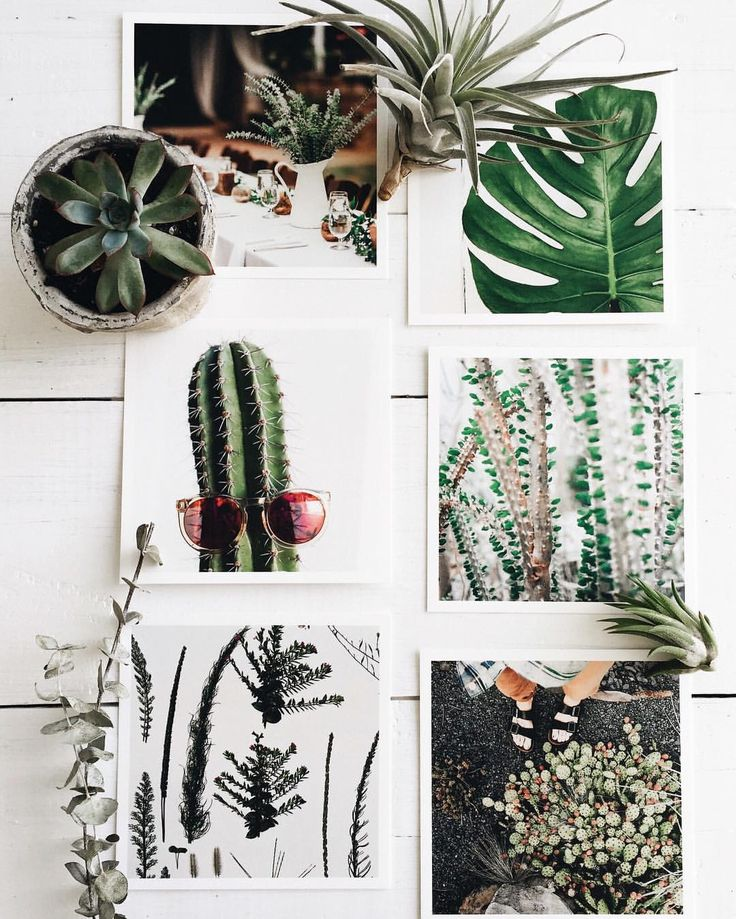 """Artifact Uprising on Instagram: """"Plants meet print. Here are a few ideas on how to keep your plants alive . Looks like you have it down both in print & in person, @ladyflashback. Show us your Artifact Uprising project with tag #artifactuprising"""""""