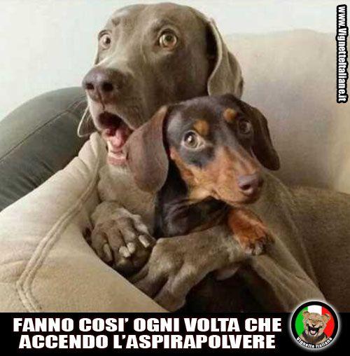 Cani uniti contro il terrore http://www.vignetteitaliane.it/4422/cani-uniti-contro-il-terrore/ #vignette #immagini #divertenti #italiano #lol #funny #pictures #italian