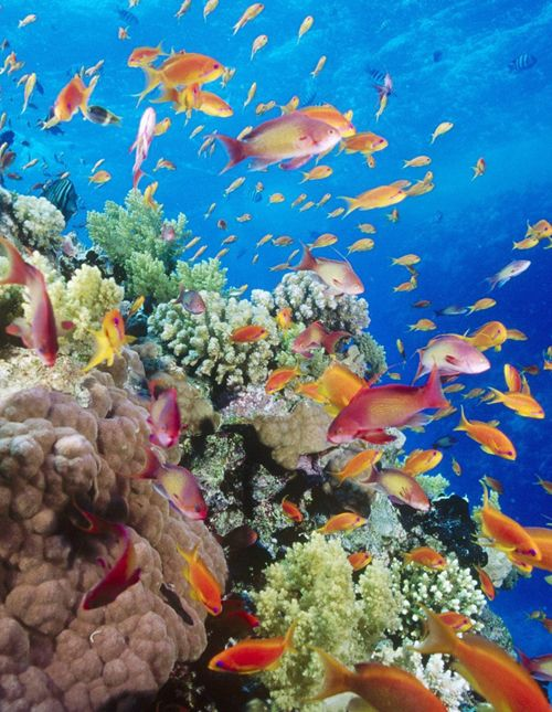 Bunaken Marine Park - North Sulawesi, Indonesia    For wildlife explorers certainly are not foreign to hear the name of Bunaken.  Famous for its beauty of nature and underwater sea, is located in Manado Bay. The ocean surrounded by the richness of sea creatures and nature, from various of fish, marine mammals, coral reefs, has been a paradise for so many lovers.    Details…