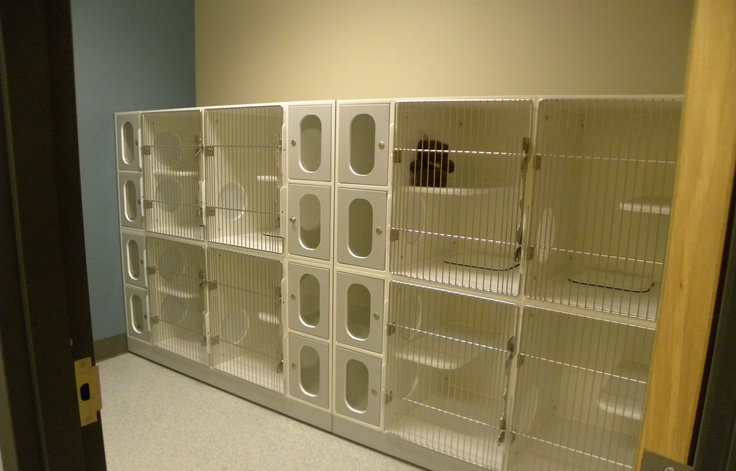 Large Cat Or Dog Cages