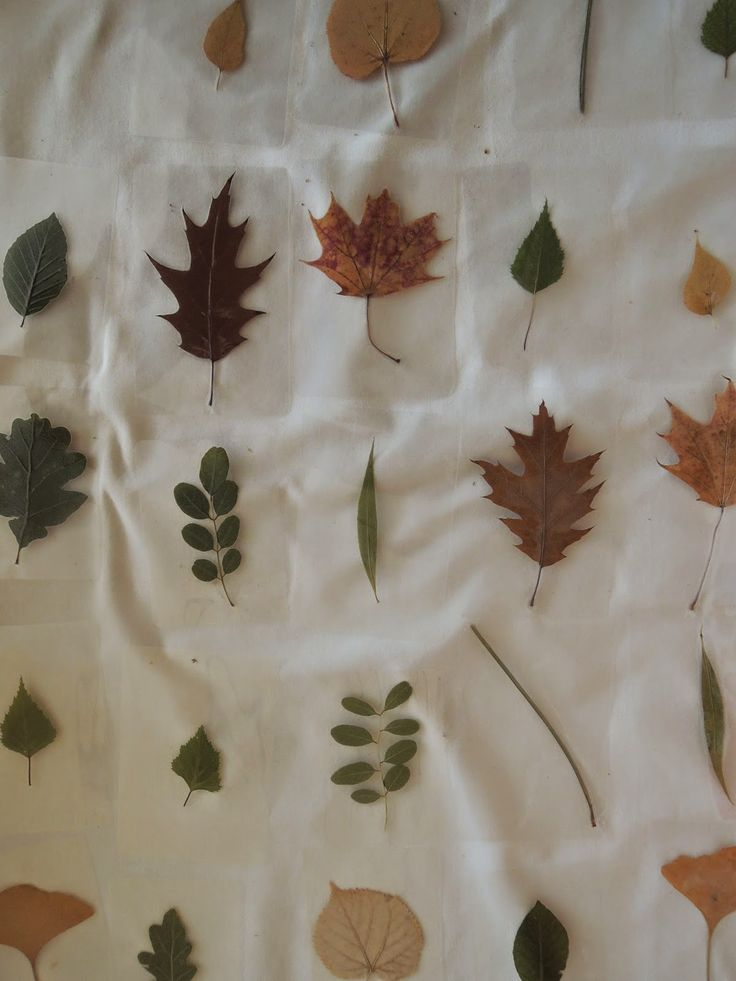 laminated leaves
