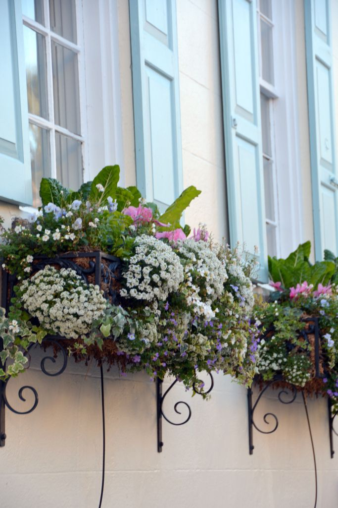 windows.quenalbertini: Window boxes in Charleston, South Carolina | © HIWTBI (home is where the boat is)
