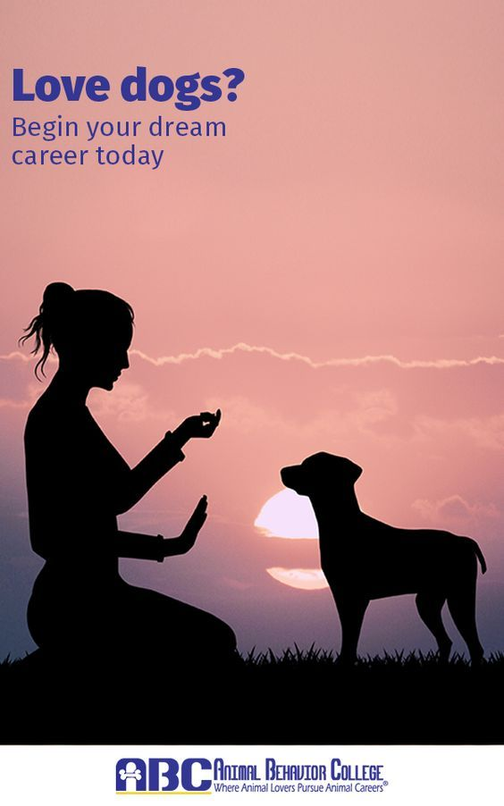 Do you love dogs? Would you like to learn how to become a dog trainer? Animal Behavior College's Dog Trainer Program has certified more than 12,000 dog trainers (ABCDT) across North America since 1998. Now it's your turn. Visit them at animalbehaviorcollege.com and start your dream career today!