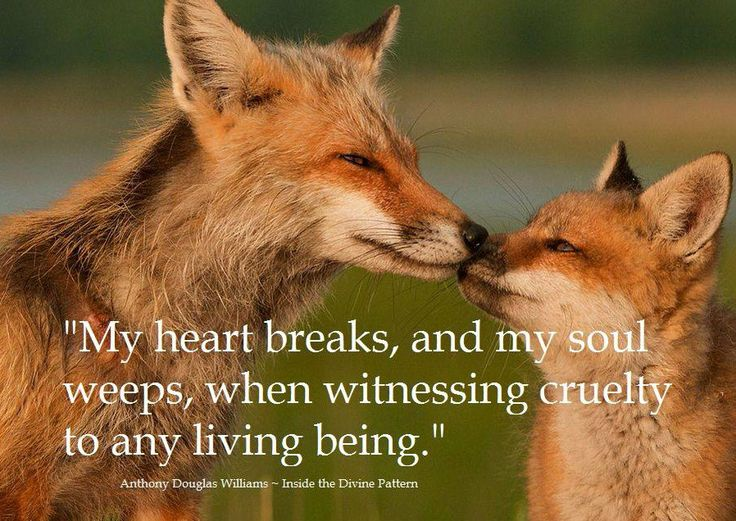 Image result for Animal Love Quotes