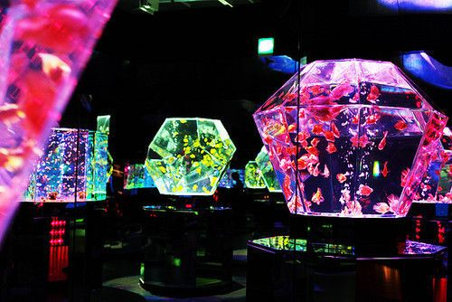 Neon geode fish tanks obsessions pinterest neon for Neon fish tank