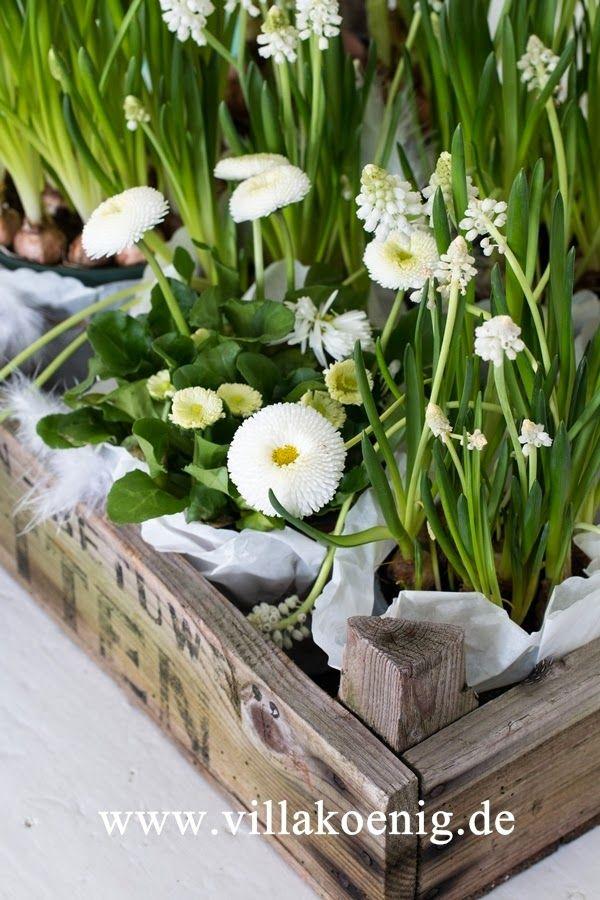 69 best Spring Flower\'s I love images on Pinterest | Beautiful ...