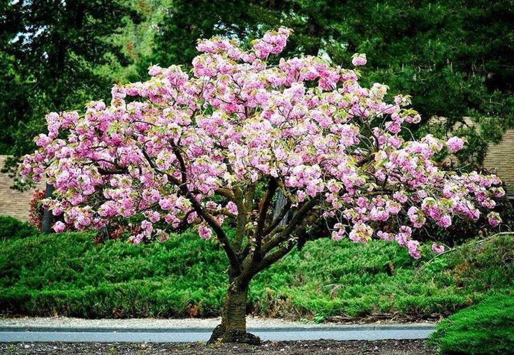 Primavera 1