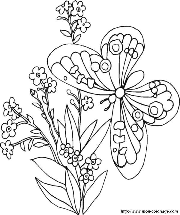 find this pin and more on coloriage papillon butterfly coloring page