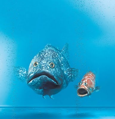 66 best images about fish pictures on pinterest tropical for Creative fish names