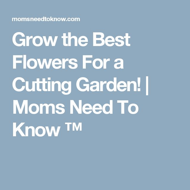 Grow the Best Flowers For a Cutting Garden! | Moms Need To Know ™