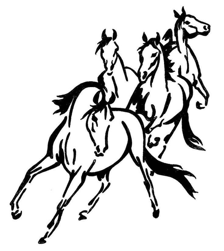 Four wild horses sticker decal brand new for carfloat tack box 4wd ute