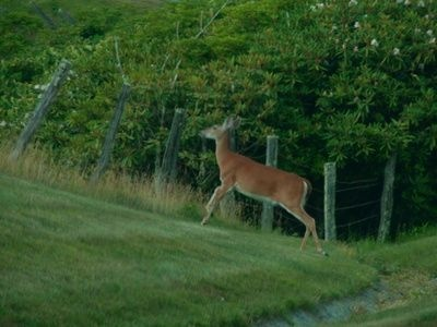 how to deer proof your vegetable garden