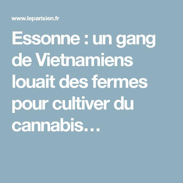 Essonne : un gang de Vietnamiens louait des fermes pour cultiver du cannabis…