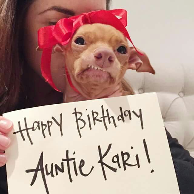 It's Tuna's Auntie Kari's birthday so he's wearing a pretty red bow to help him wish her Happy Birthday!  (She is so lucky to be his Auntie)! I love Tuna! ❤ ❤ ❤