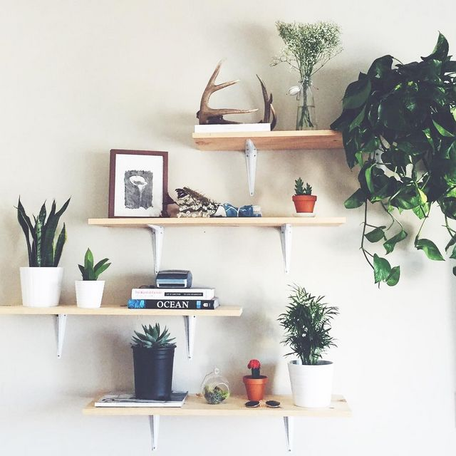 Best 25 plant shelves ideas on pinterest plant ladder shelves and shelves for plants - Bedroom wall shelf designs ...