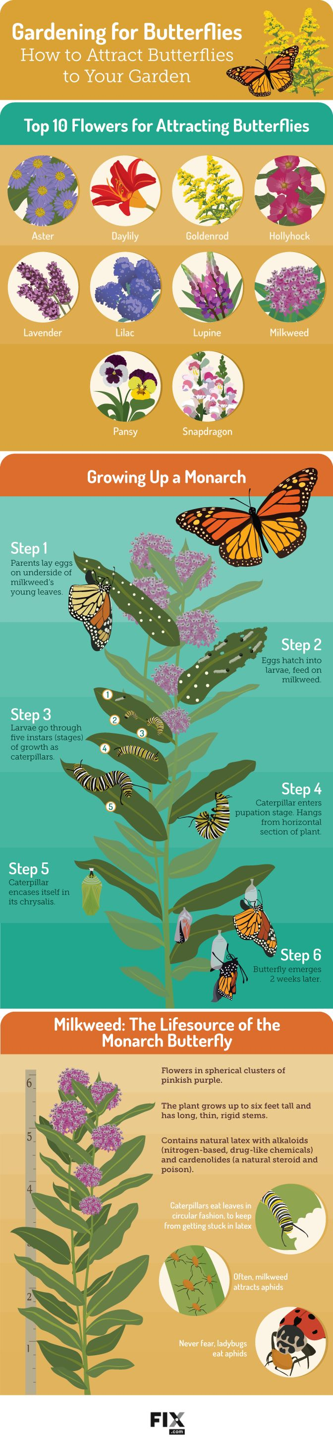 Gardening for Butterflies How to Attract Butterflies to Your Garden #infographic…