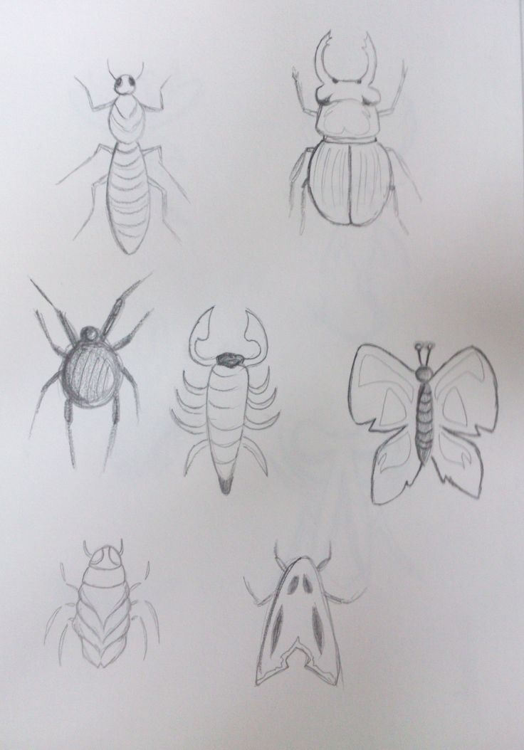 Insect designs 1