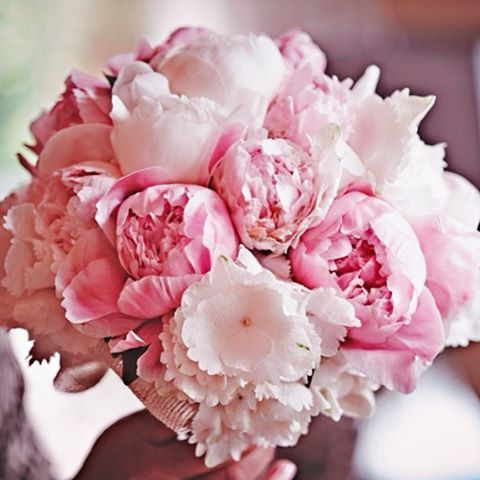 pink wedding flowers – thanks to a hint from Michele, big blooms cost less becau