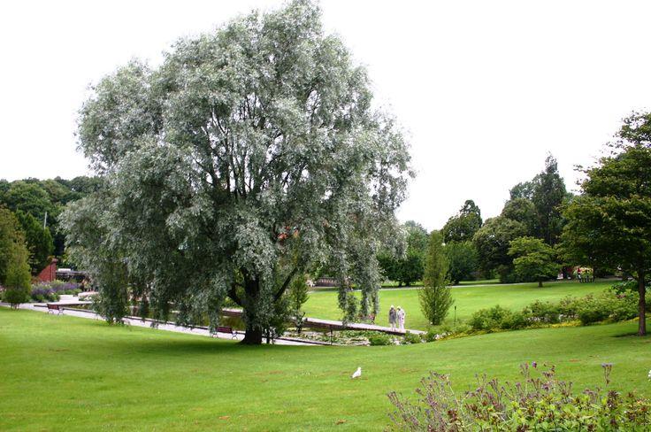 goteborg ogród botaniczny