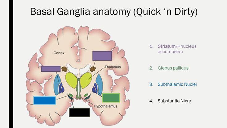 Resultado de imagen para substantia nigra