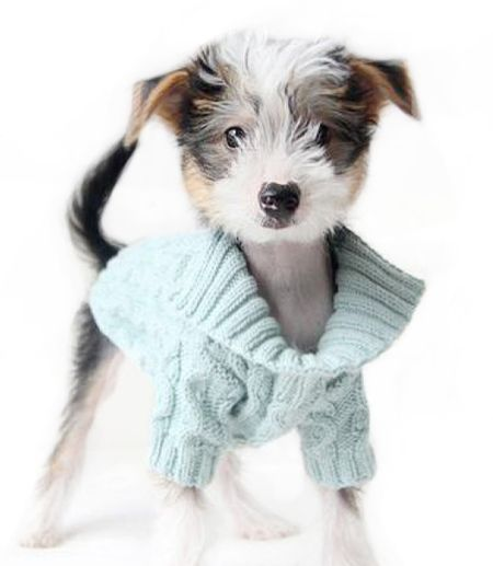 Organic Collared Dog Sweater   Teacupspuppies.com #DogsInClothes #Dogs In #Clothes Dog Clothing