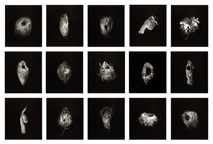"Richard Barnes, ""Grid of Nests"" (2000) | photograph | gelatin silver prints    Source: http://www.sfmoma.org/explore/collection/artwork/105715#ixzz1jCA3IN68   San Francisco Museum of Modern Art"