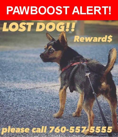 Please spread the word! Penny was last seen in San Marcos, CA 92078.    Nearest Address: 9512 9th Street, San Marcos, CA, United States