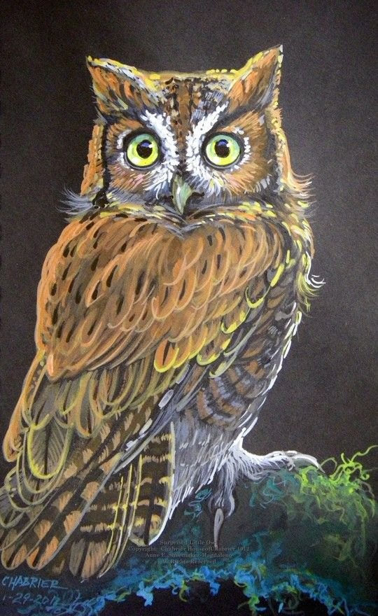 'Surprised Little Owl' by House of Chabrier