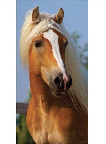 Paarden Strandlaken