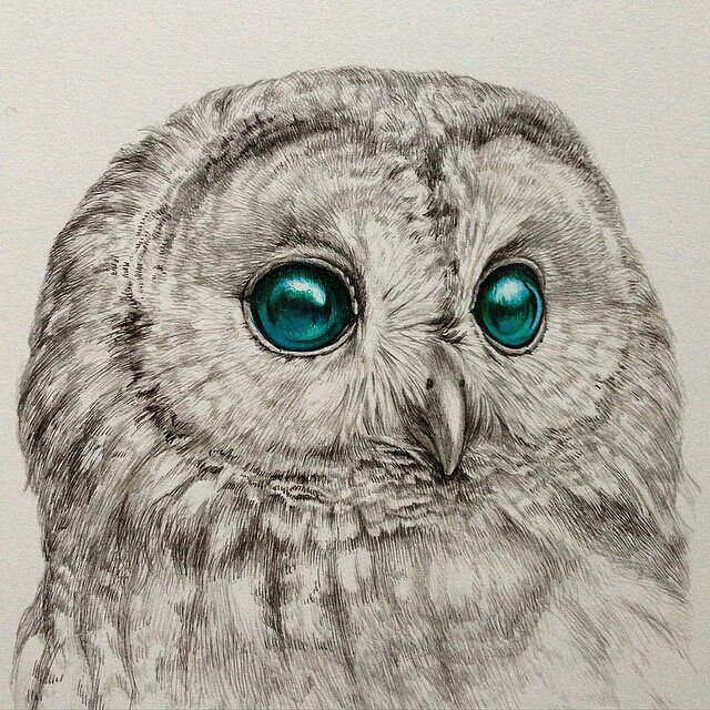 Owl pen drawing by @kozue_oshima #artistinspired #theartisthemotive . by worldofpencils