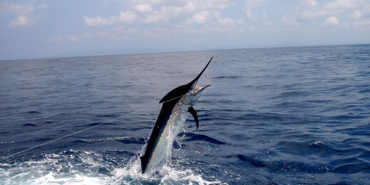 67 best north myrtle beach favorites images on pinterest for Deep sea fishing in myrtle beach