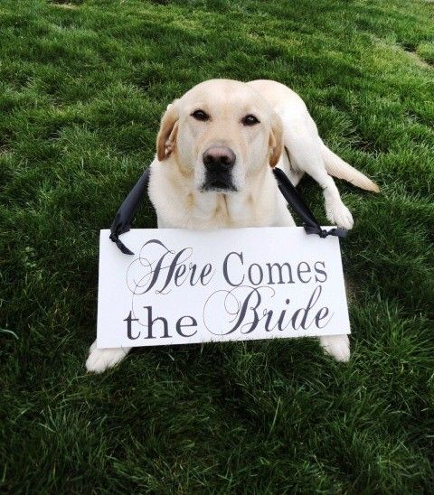 Here Comes the Bride Sign with Just Married Wood Wedding Signs. Crisp White, 2-sided. Wedding Photo Prop, Reception Sign, Dog Ring Bearer.. $50.95, via Etsy.
