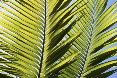 Palm trees can be dangerous if you touch them in the wrong spot. Sharp thorns on their branches, trunks and the undersides or tips of fronds can puncture the skin and cause bacterial or fungal ...