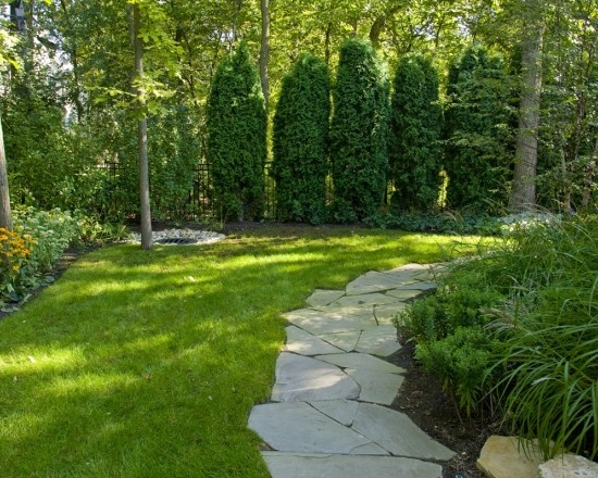 Backyard Trees For Privacy : Pathway  Green Spaces  Pinterest