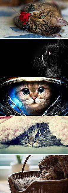 Обои на рабочий стол: Милые котики