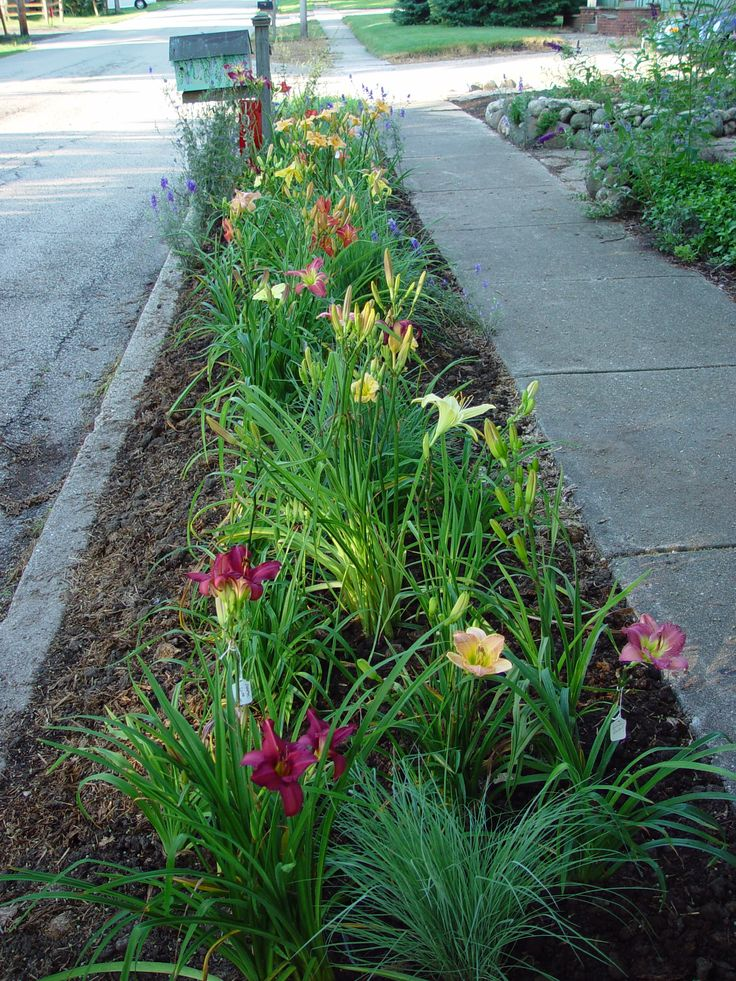 7-11-10 who needs grass when you can have flowers... plant a daylily garden. 41 different varieties, larkspur, schizachyrium scoparium little bluestem. added periwinkle blue phlox seeds and an additional 12 different varieties in 2011. can't wait until the breeder opens this season. photos taken by Plays with Dirt, shot by susi wilson - My Cool Garden