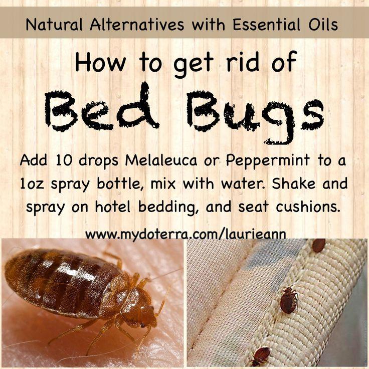 Essential Oil Tip & Life Hack Get Rid Of Bedbugs DIY